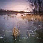 Beaver Place by Jola Martysz