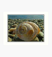 Shell at the Beach Art Print
