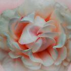 Silk Blush by Christine Lake