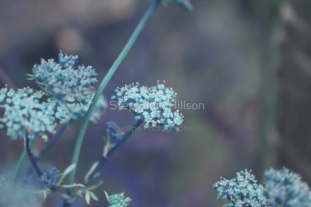 Blue Whispers  by Stephanie Hillson