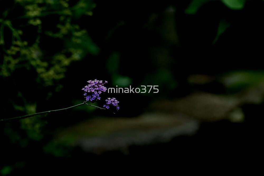 Hello by minako375