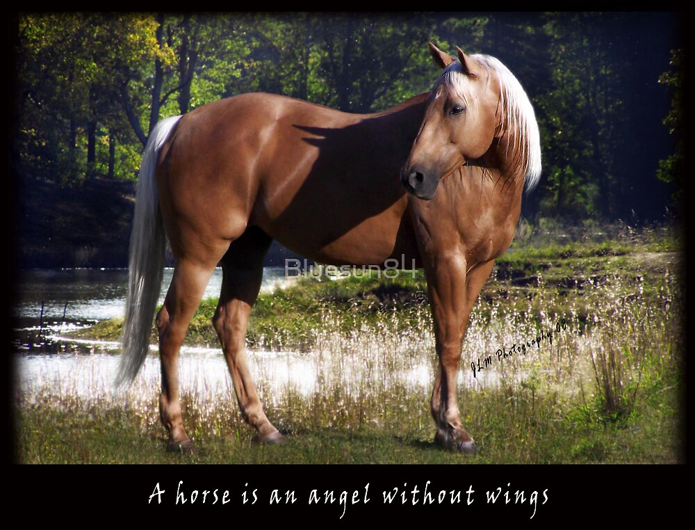 A horse is an angel without wings   by Bluesun84