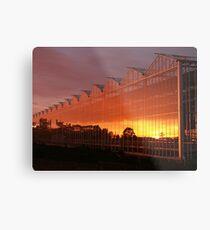 Glasshouse Sunset  Metal Print