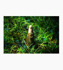 Cypress Knee Photographic Print