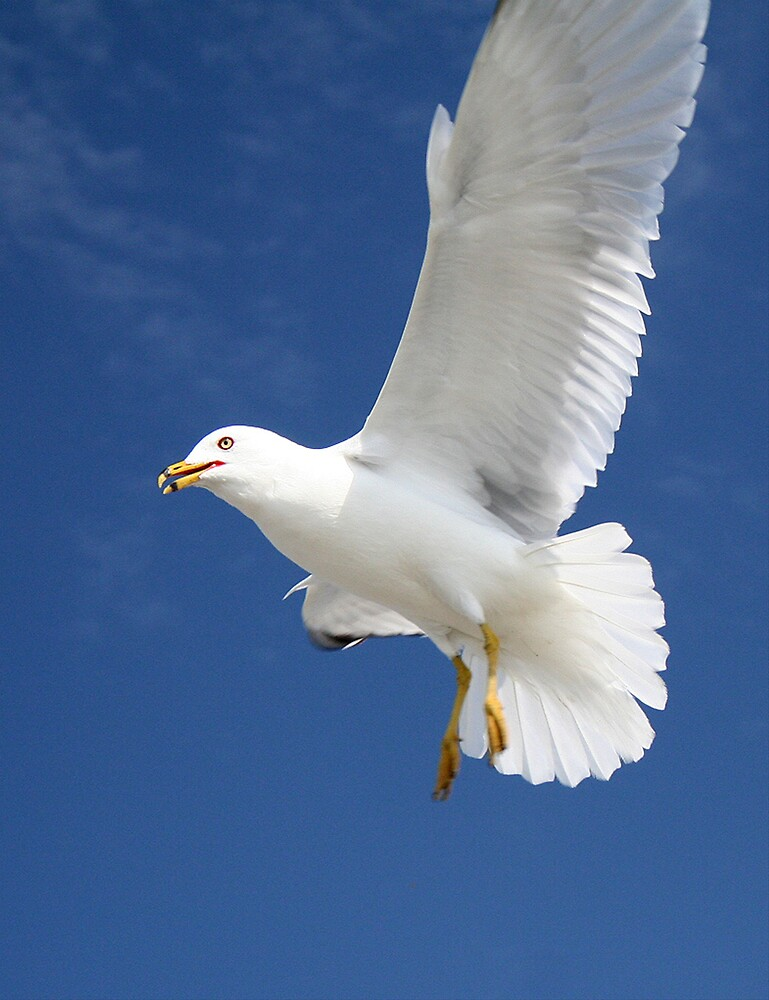 Seagull 20D0032100 by Cristian