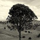 Einsamer Baum von Evita