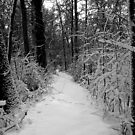 Never captured, never tamed...I feel the spirit in my soul..in a winter playground by jammingene