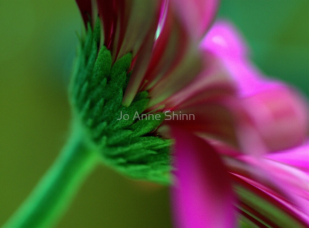 Dorsum 3 by Jo Anne Shinn