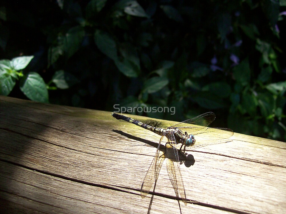 Settled Dragon fly by Sparowsong