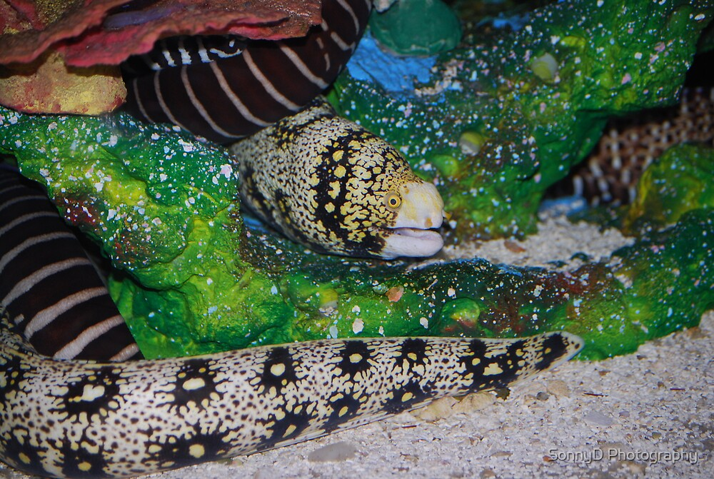 eel by SonnyD Photography