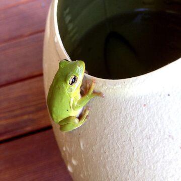 Tree Frog by TrickiWoo