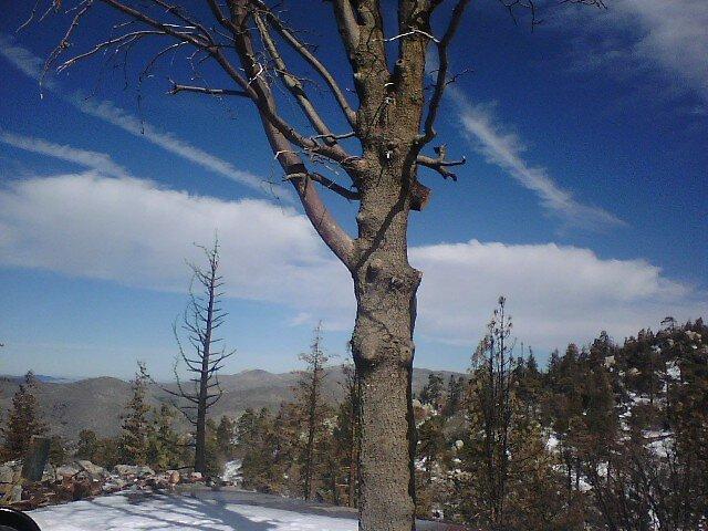 Lone tree by Andrew Tucker