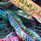 Croton Leaves by Roz McQuillan