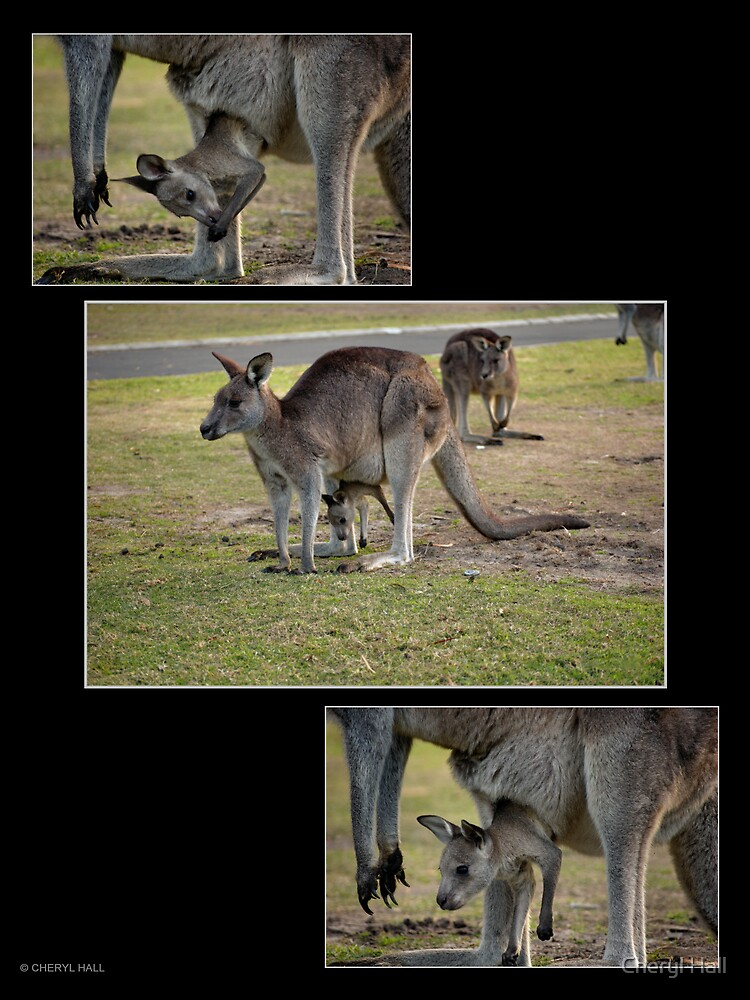 ROO MONTAGE by Cheryl Hall