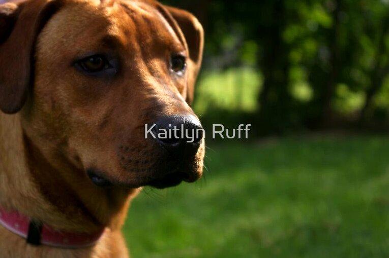 Stay by Kaitlyn Ruff