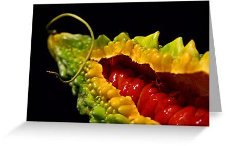 Bitter melon (ampalaya) by jerry  alcantara