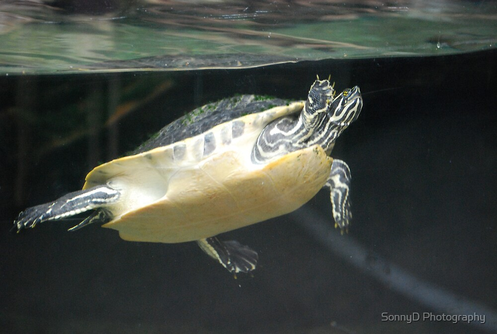 turtle 2 by SonnyD Photography