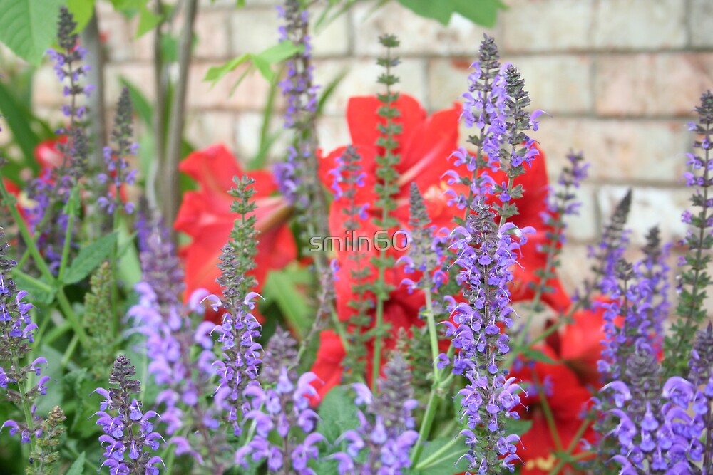 Purple Salvia and Red Amerylis by smiln60