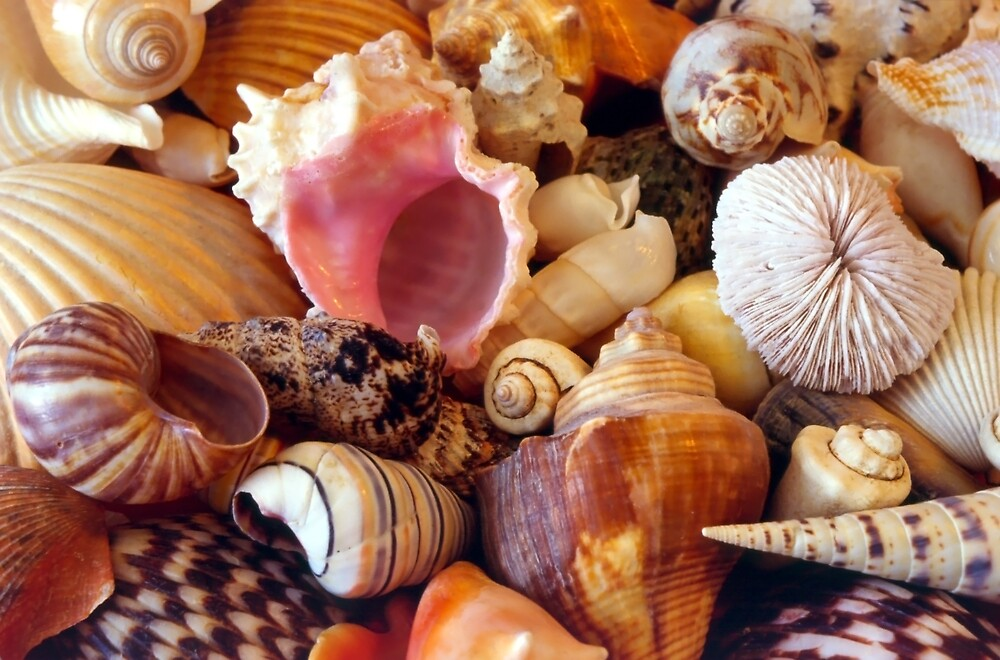 Seashell Abstract - 882 views by SteveOhlsen
