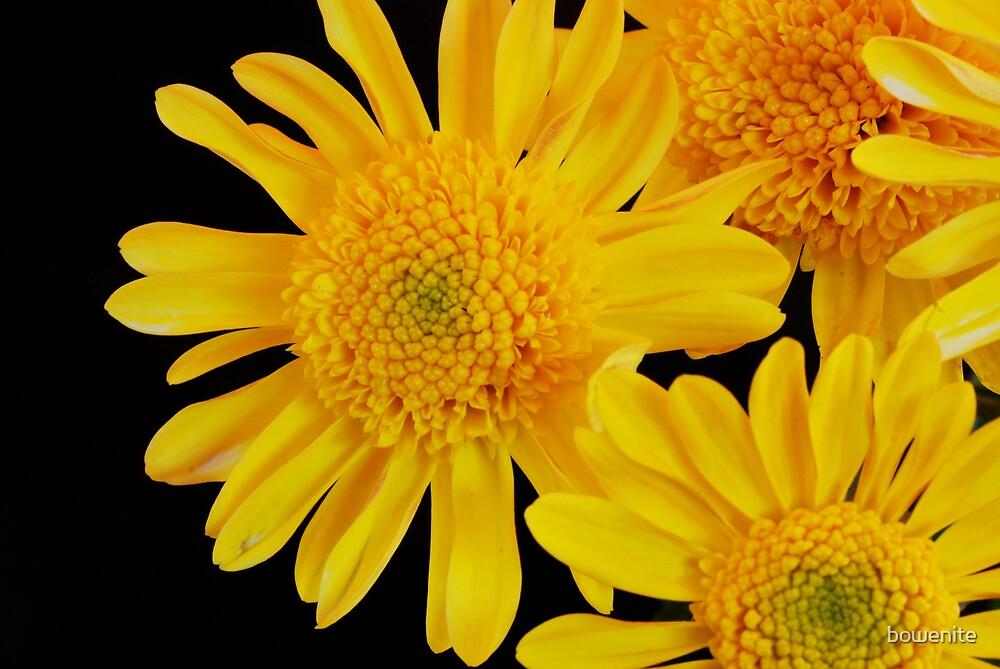 """""""Mellow Yellow"""" by bowenite"""
