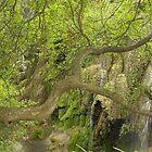 Gorman Falls, Texas by Tamas Bakos