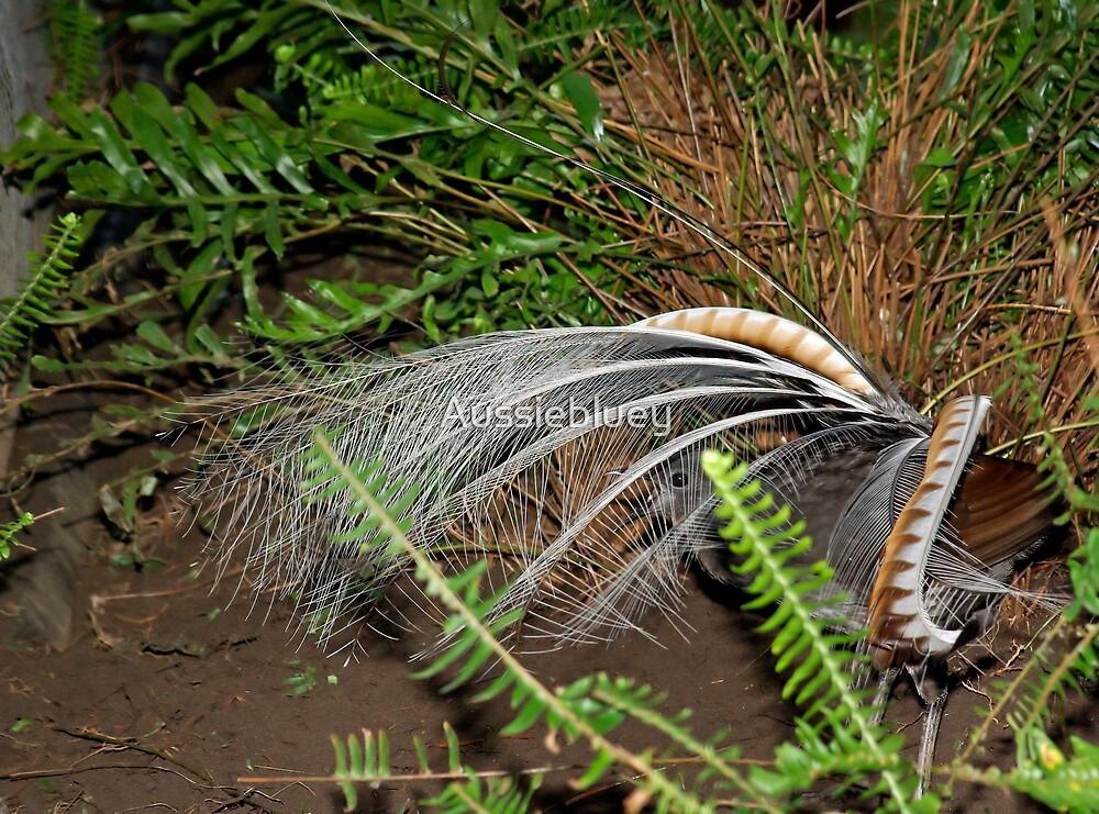 Lyrebird. by Aussiebluey