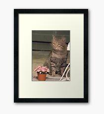 NO CAT FOOD? Surely you jest..... Framed Print