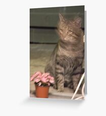 NO CAT FOOD? Surely you jest..... Greeting Card