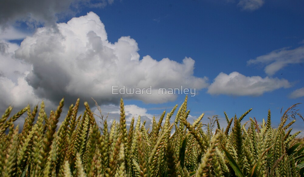 skys limit  by Edward  manley