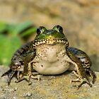 Green Frog by Michael Cummings
