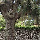 The Tree by Mary Kaderabek-Aleckson