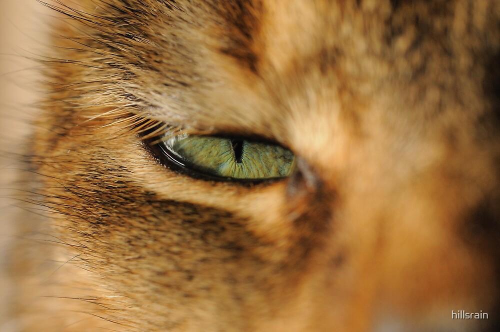 Got my eye on you by hillsrain