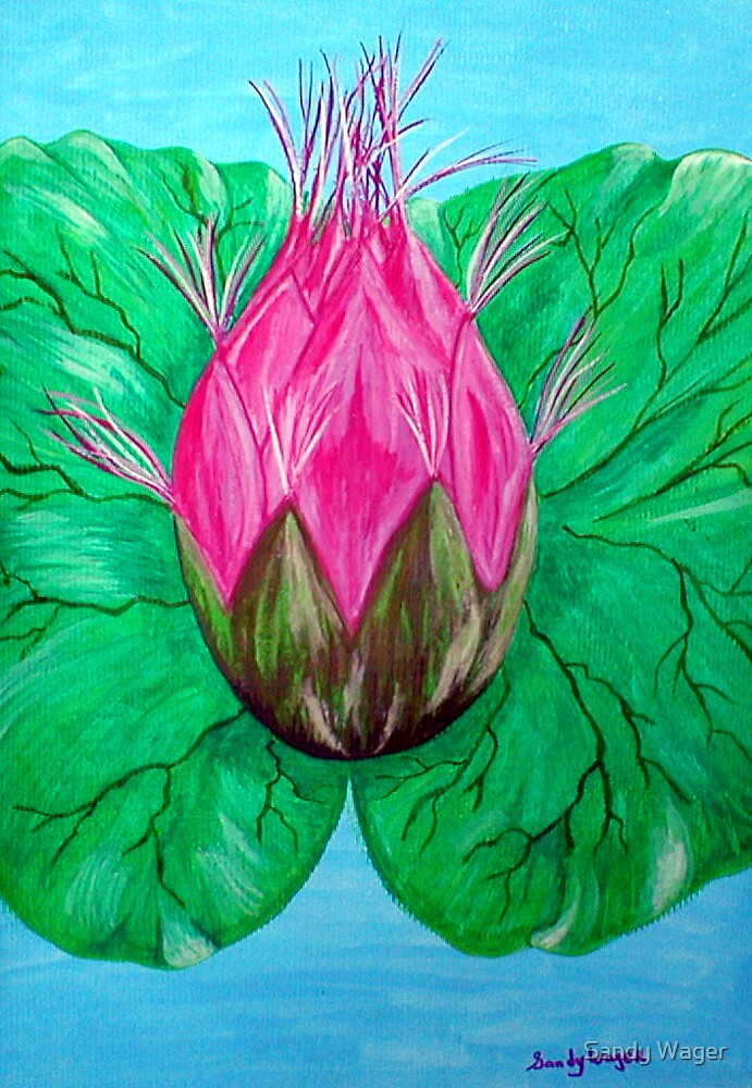 Lily Pad by Sandy Wager