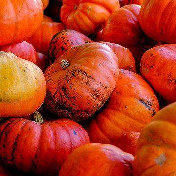 Pumpkin Harvest by JABK