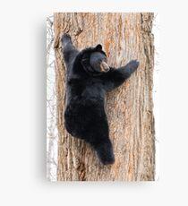 Coming Down - Black Bear Canvas Print
