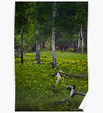 Wildflowers Forests Poster