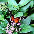 Butterfly-Butterfly... by shellyb