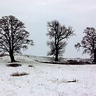 Tree Sisters by Trevor Kersley