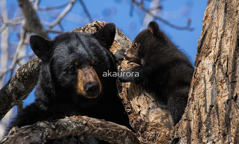 I Love You Mom - Black Bear by akaurora