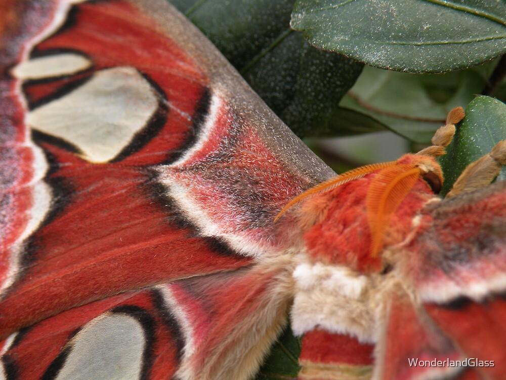 {gaze upon} velveteen wings by WonderlandGlass