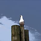 Seagull on Post 2 by steelwidow