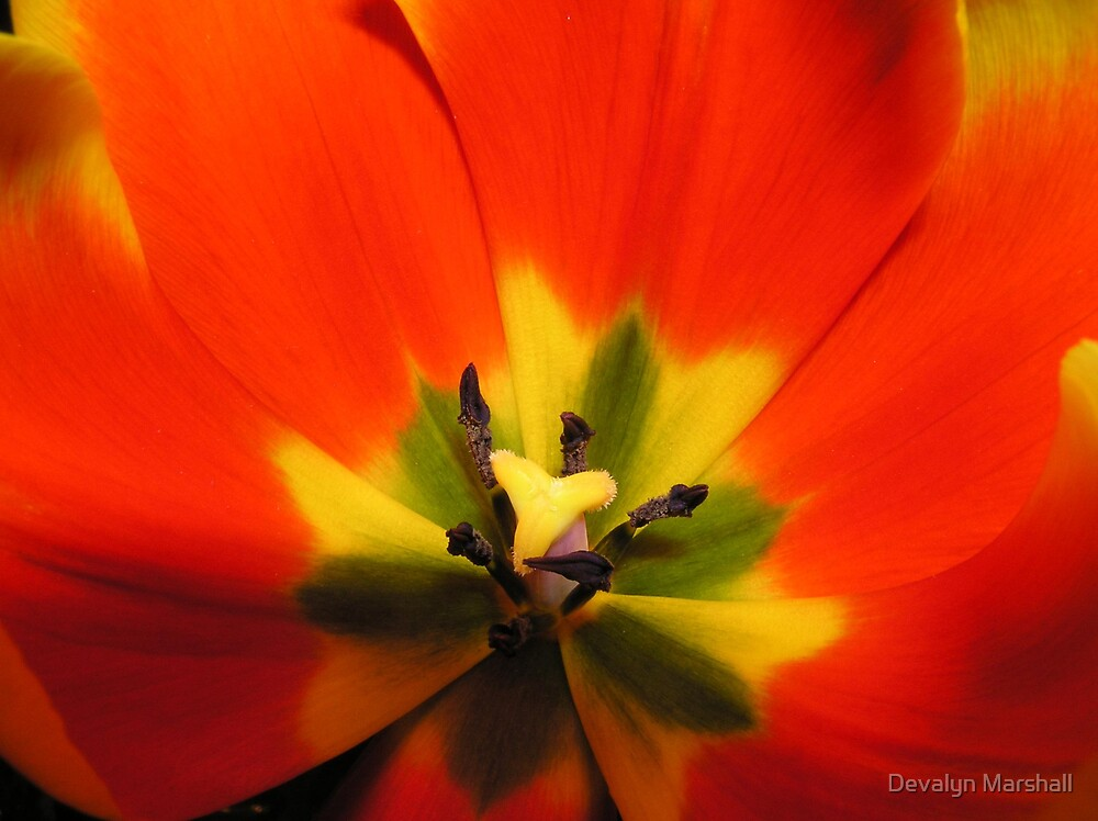 Radiant Orange  by Devalyn Marshall