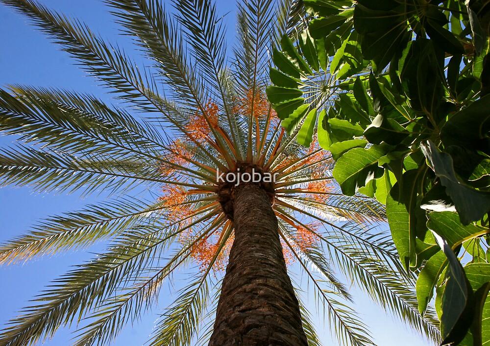Date Palm Tree.  LOS CRISTIANOS, TENERIFE, CANARY ISLAND by kojobar