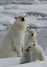 Polar Bear Family by Steve Bulford