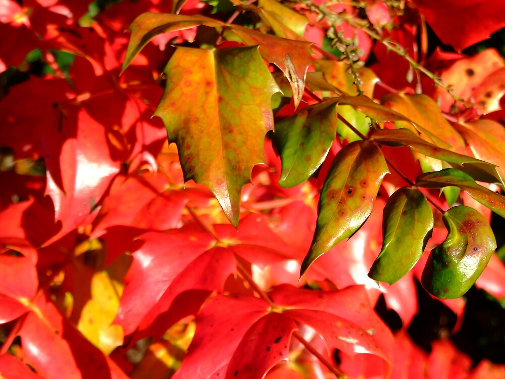 Red Foliage by Susan Dailey
