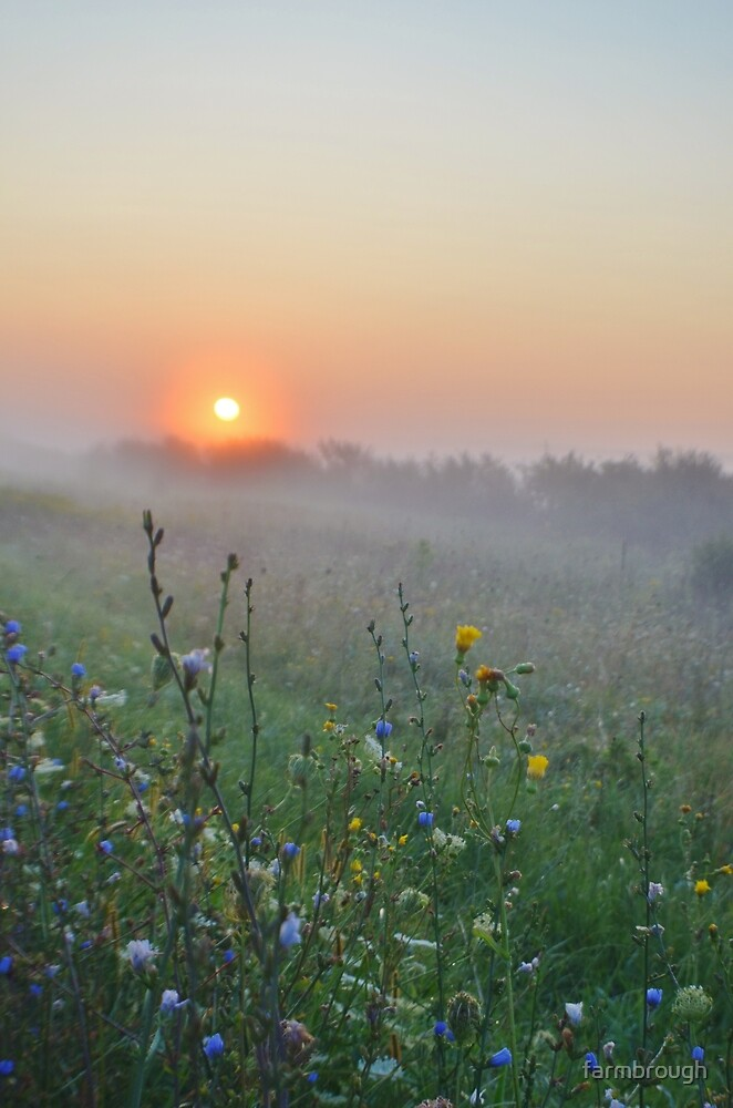 Misty Sunrise With Flowers by farmbrough