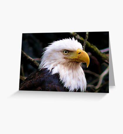 Portrait Of An Eagle III  Greeting Card