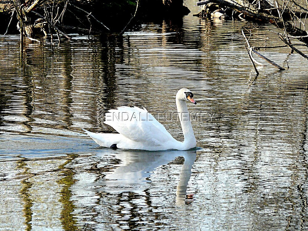 SWANS DOWN 2 by KENDALL EUTEMEY