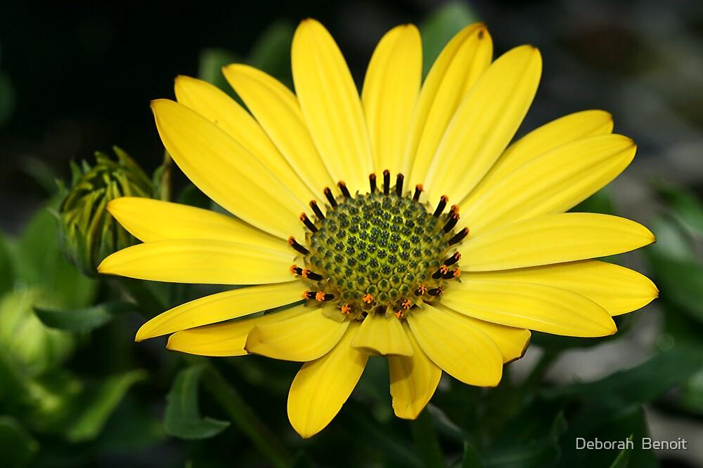Beauty Of Yellow by Deborah  Benoit