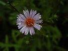 Petals after rain by Themis